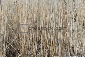 Tight Composition of Pond Reeds.