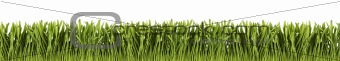 Green grass panorama isolated on white background.