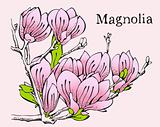 Magnolia pink design card