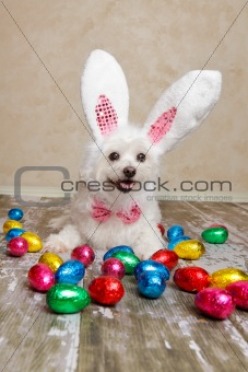 Easter bunny dog with chocolate easter eggs