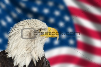 Portrait of American bald eagle against USA flag stars and strip