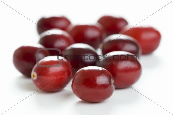 fresh cranberries isolated
