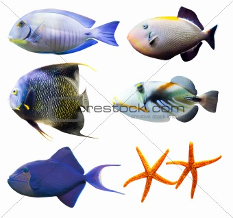 tropical world of fish part 2 isolated on white