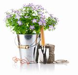 flowers in bucket with garden tools