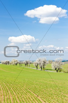 spring landscape with a road, Czech Republic