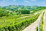 vineyars in Asti Region, Piedmont, Italy