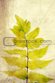 Old, vintage background with fern leaves