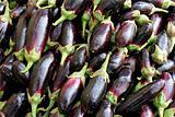 dark blue eggplant