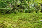 Moss in a japanese garden