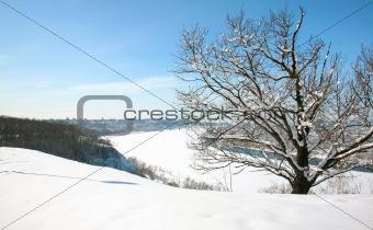 Beautiful Snow Tree in April Nizhny Novgorod Russia