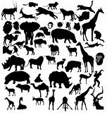 set of African and tropical animals