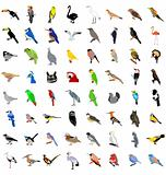The big set of the different birds