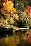 Forested border of Oak Creek canyon shows its fall colors twice