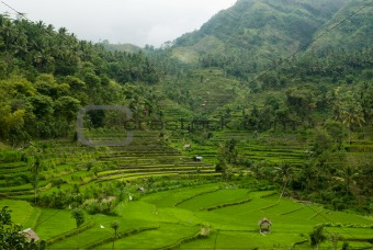 Bali Valley