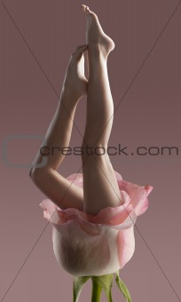 Long pretty bare woman legs isolated