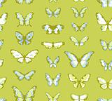 Seamless vector highly detailed background with butterflies in green and blue colors