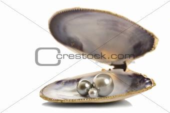 Beautiful pearls in a seashell