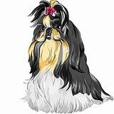 vector sketch dog Shih Tzu breed