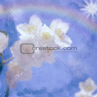 background with spring flowers of jasmine