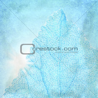 Blue background with a textured leaf