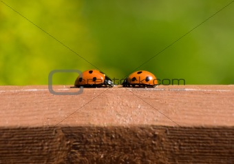 ladybird meeting