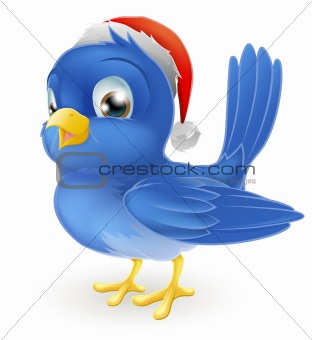 Blue bird in Santa Claus hat
