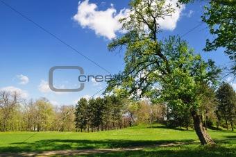 Spring in park