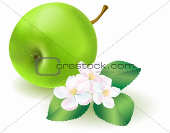 Green apple with leaf and flowers