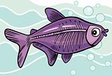 cartoon x-ray fish