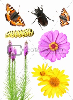 Set of flowers and insects