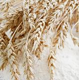 Wheat ears on the table with flour