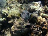 fish and camera