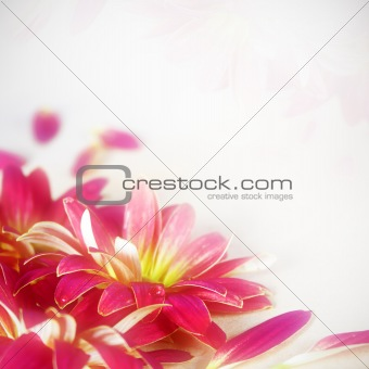 Floral Flower Background
