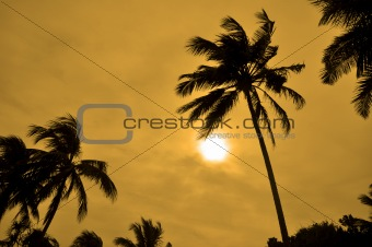 Silhouettes of Palm trees against the sun