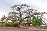The big tree in the village