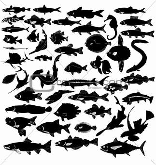 The set of silhouettes of the different fishes