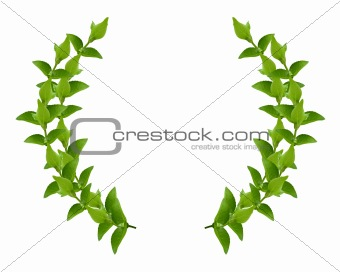 Wreath from Green leaves