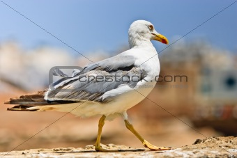 A photo of a seagull and blue sky.