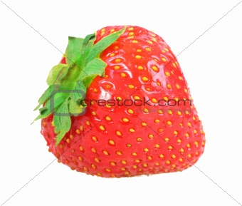 Single fresh red strawberry