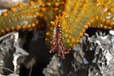 The tentacles of the sea star