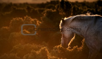 Beautiful image of New Forest pony horse backlit by rising sun