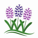hyacinths