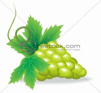 branch of green grape