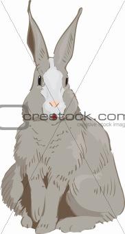 Rabbit Drawn