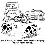 Dairy Cow Has a Date