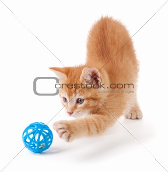 Cute orange kitten with large paws playing with a toy.