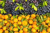 Fresh orange and grape fruit