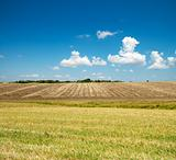 ploughed and green fields