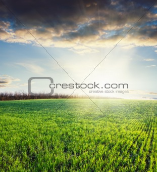 grass and cloudy sky on sunset