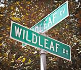 Wildleaf Street And Cove Intersection